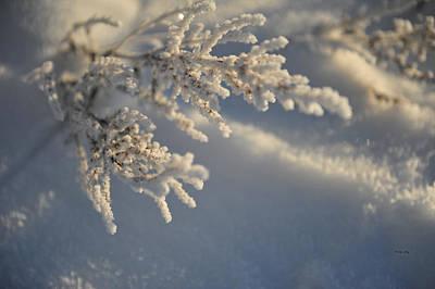 Photograph - Amazing Frost by Randi Grace Nilsberg