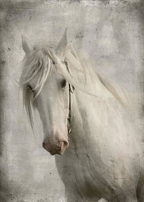 Horses Portrait Photograph - Amazing Grace by Dorota Kudyba