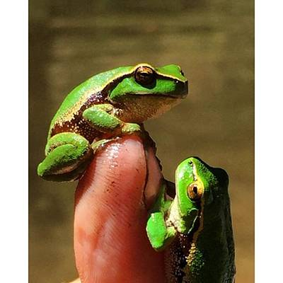 Photograph - Amazing Green Frogs Aberfeldy River by Paul Dal Sasso