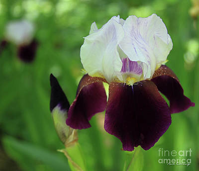 Photograph - Amazing  Iris Flower Garden Art by Reid Callaway