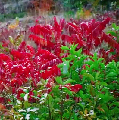 Mixed Media - Amazing Nature Blessings Magic Colors Cherry Red Green Shrubs Plants Save  The Environment by Navin Joshi