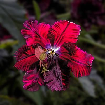 Photograph - Amazing Red Flower Macro by John Haldane