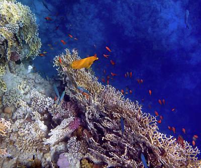 Photograph - Amazing Red Sea 2 by Johanna Hurmerinta