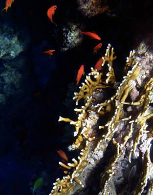 Photograph - Amazing Red Sea 4 by Johanna Hurmerinta