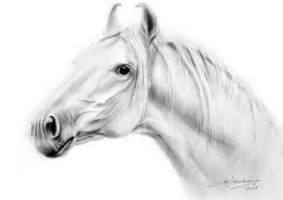 Equine Art Drawing - Amazing Swraj by Danguole Serstinskaja