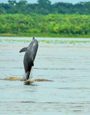 Photograph - Amazon Dolphin Breaching by Allen Sheffield