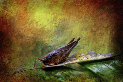 Grasshopper Digital Art - Amazon Grasshopper by Terry Davis