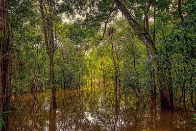 Photograph - Amazon Jungle by Maria Coulson