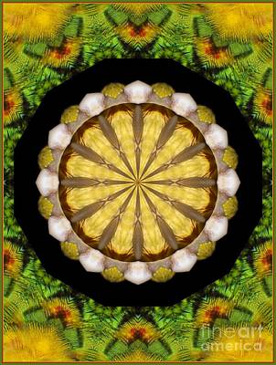 Photograph - Amazon Kaleidoscope by Debbie Stahre