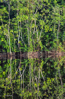 Photograph - Amazon Reflections 5 by Allen Sheffield