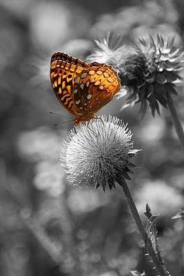 Amber Butterfly Colorized Art Print