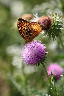 Photograph - Amber Butterfly by David Dunham