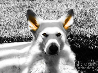 German Shepherd Photograph - Amber Eyes by Heather Joyce Morrill