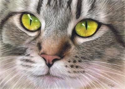 Amber Eyes Art Print by Karen Hull