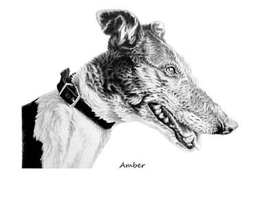 Rescued Greyhound Drawing - Amber by John Searson