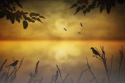 Amber Morning Print by Tom York Images