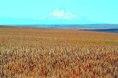 Photograph - Amber Waves Of Grain by Brian O'Kelly