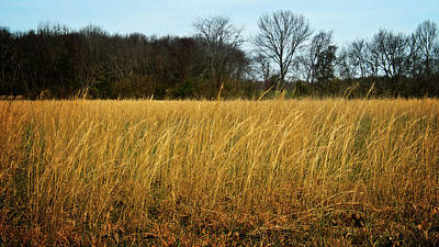 Photograph - Amber Waves Of Grain by George Taylor