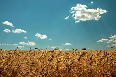 Wheat Field Sky Photograph - Amber Waves Of Grain by Todd Klassy