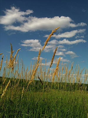 Goonies Photograph - Amber Waves Of Grain by Trish Hale