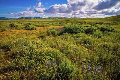 Photograph - Amber Waves On The Carrizo by Lynn Bauer