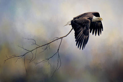 Photograph - Ambition Bald Eagle Art by Jai Johnson