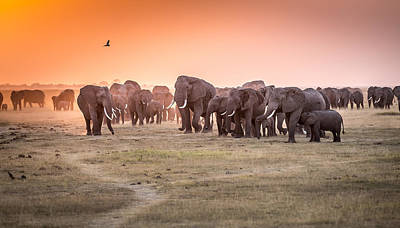 Flock Photograph - Amboseli Morning Stroll To Starbucks by Jeffrey C. Sink