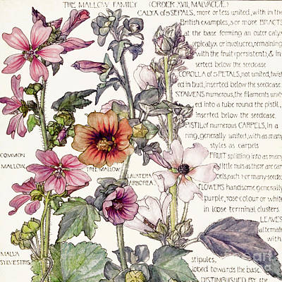 Ambrosia Iv Art Print
