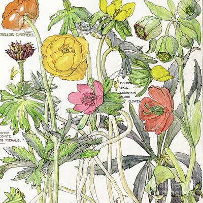 Ambrosia Vi Art Print