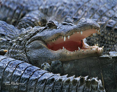 American Alligators Art Print