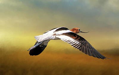 Photograph - American Avocet  by Donna Kennedy