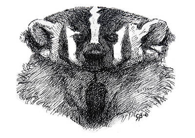 Yellowstone Drawing - American Badger by George Bumann