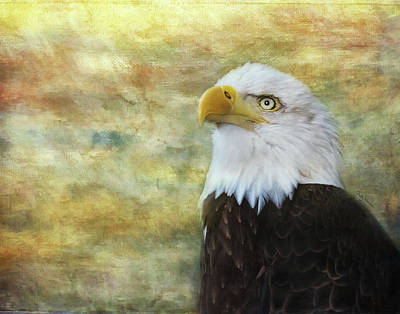 Photograph - American Bald Eagle At Sunrise by Betty Denise
