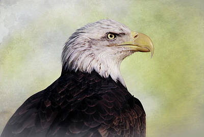 Photograph - American Bald Eagle by Elaine Malott