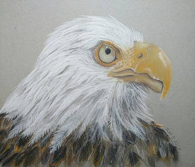 Pastel - American Bald Eagle by Joan Mansson