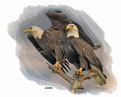 Digital Art - American Bald Eagle Pair by Larry Linton
