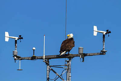 American Bald Eagle Perched On Communication Tower Art Print by David Gn