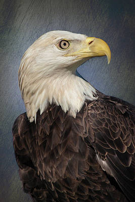 Photograph - American Bald Eagle Portrait by Dawn Currie