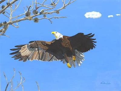 American Bald Eagle Art Print by William Demboski