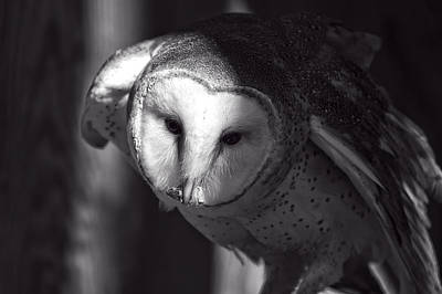 Digital Art - American Barn Owl Monochrome by Chris Flees
