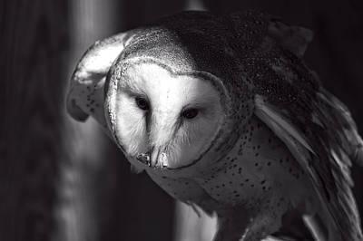 Bird Of Prey Digital Art - American Barn Owl Monochrome by Chris Flees