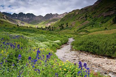 Photograph - American Basin Flowers by Steve Stuller