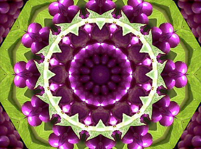 Photograph - American Beautyberries Kaleidoscope by Robyn Stacey