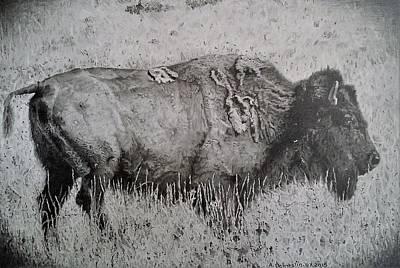 American Bison Original by Adrienne Deines