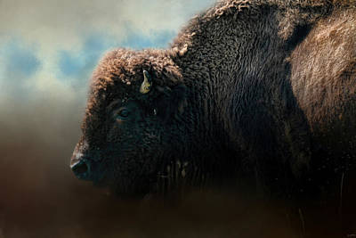 American Bison After The Storm Art Print
