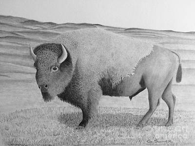 Yellowstone Drawing - American Bison by George Sonner
