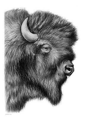 Landmark Drawing - American Bison by Greg Joens