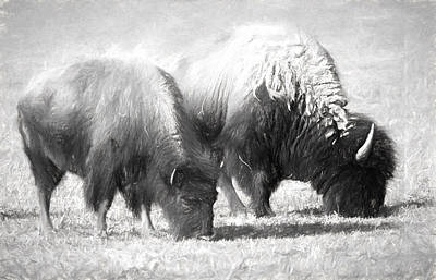 American Bison In Charcoal Original by Linda Phelps