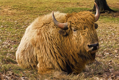 Painting - American Bison by Joe Sparks