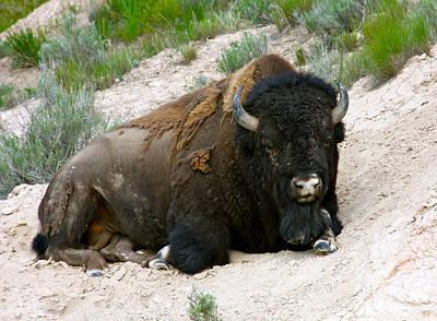 Photograph - American Bison by Karon Melillo DeVega